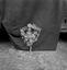 bouquet de conscrit, fabriqué par Mme Le Quintrec et donné au MNATP (fleurs en bois effilé enfoncées dans une armature en bois) ; 21 juillet à 11h ; Surzur ; Kerlis ; [photo originale 102]