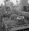 bénitier en granit dans lequel baigne un rameau ; 23 juillet à 8h30 ; Surzur ; cimetière ; [photo originale 59]
