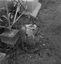 bénitier en granit ; 23 juillet à 8h30 ; Surzur ; cimetière ; [photo originale 61]
