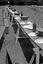 noce de Thérèse Jégo ; un aperçu des tables du repas de noce ; on voit au fond à d. les échelles servant de bancs ; 25 juillet à 9h ; Surzur ; pré de Mme Jégo ;  [photo originale 56]