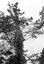 procession de Sainte Anne ; on aperçoit fixées aux branches des fleurs contenant des pétards ; 30 juillet à 15h30 ; Brandérion ; propriété de M. de Goulen ; [photo originale 170]