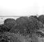 meules de varech ; 05 août à 10h30 ; Penmarc'h ; Loch-de-la-Joie ; [photo originale 185]