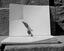 pincette destinée à prendre le tison pour allumer la pipe ; fabriquée par M. J.-M. Breton et achetée pour le MNATP ; 14 août à 15h45 ; Le Faouët ; cour du patronage ; [photo originale 298]