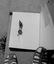 pincette destinée à prendre le tison pour allumer la pipe ; fabriquée par M. J.-M. Breton et achetée pour le MNATP ; 14 août à 15h45 ; Le Faouët ; cour du patronage ; [photo originale 299]