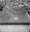 cimetière : bénitier en forme de coquille Saint-Jacques creusée dans la pierre tombale ; 24 août à 16h30 ; Le Cloître-Pleyben ; [photo originale 419]